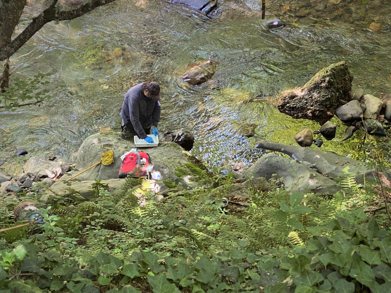 Toma de muestras de ADN ambiental en Picos de Europa