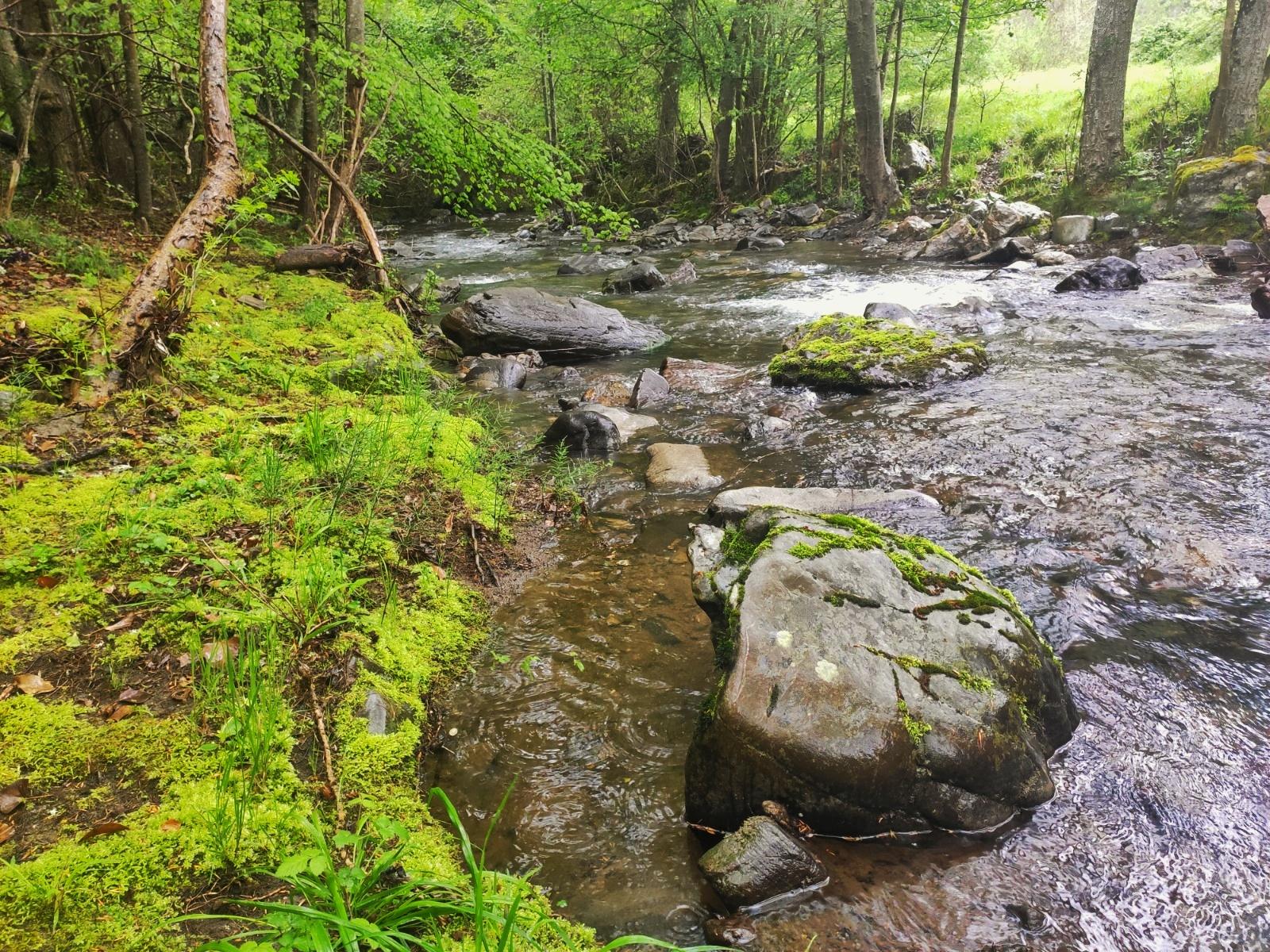Río Bullón en el entorno de Basieda